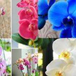Орхидея: уход и пересадка в домашних условиях, болезни и вредители