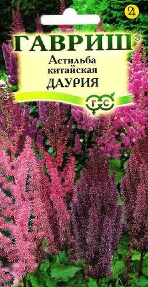 астильба размножение семенами