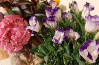 Эустома: уход и выращивание в домашних условиях и саду