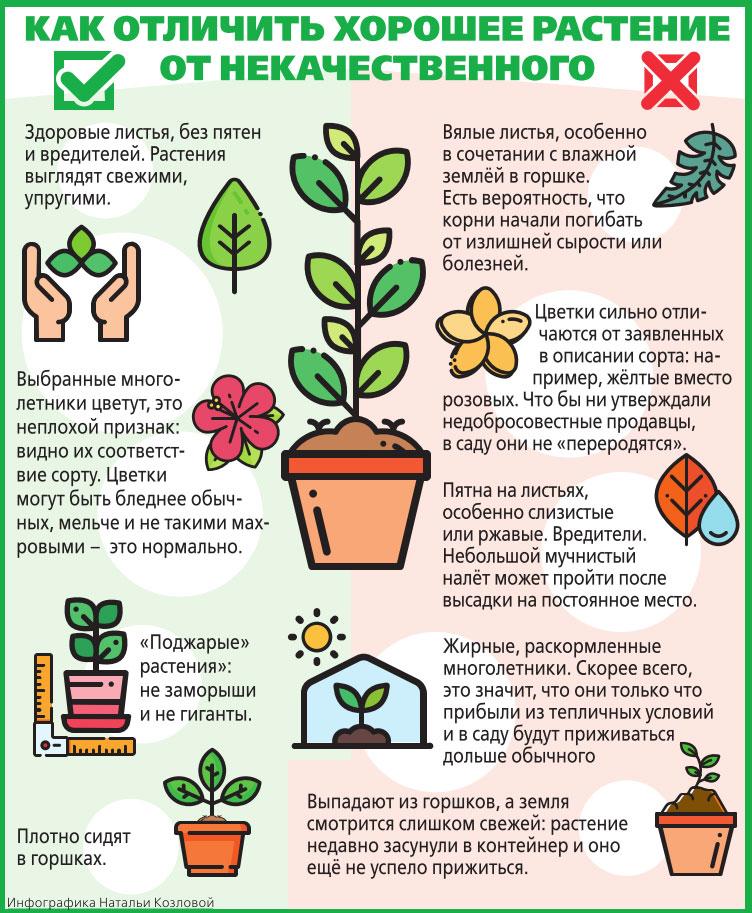 разводить домашние цветы
