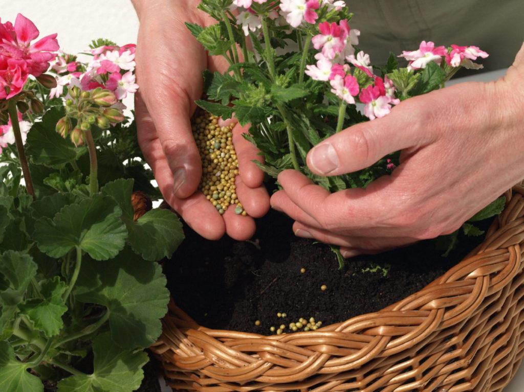 чем можно подкормить комнатные цветы