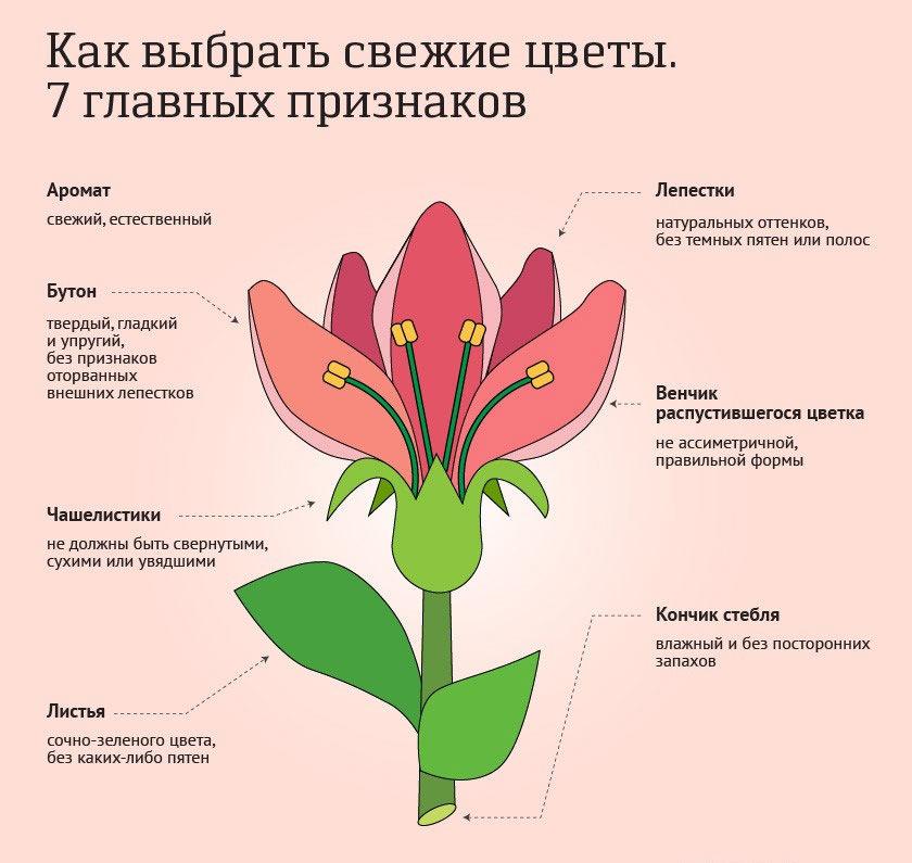 пересаживать цветы после покупки
