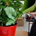 Чем подкормить комнатные цветы: виды удобрений, народные средства