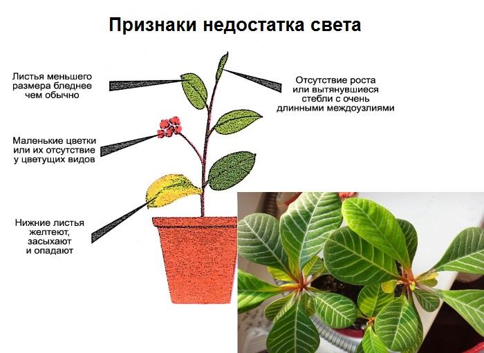 как разводить цветы