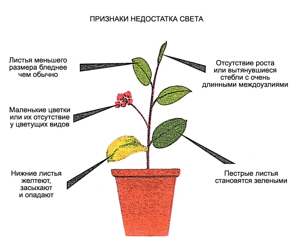 влияние освещения на растения