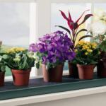 Как разводить комнатные цветы: подробное руководство для чайников