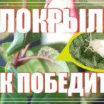 Как избавиться от белокрылки на комнатных растениях: подробное руководство