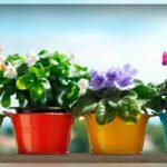 Как размножить цветы в домашних условиях: все способы