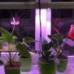Освещение для комнатных растений: установка и использование ламп, виды фитоламп, недостаток или избыток света