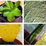 Мошки в комнатных цветах: средства для борьбы с мошками, виды и причины появления