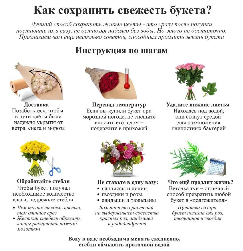 как сохранить дома цветы
