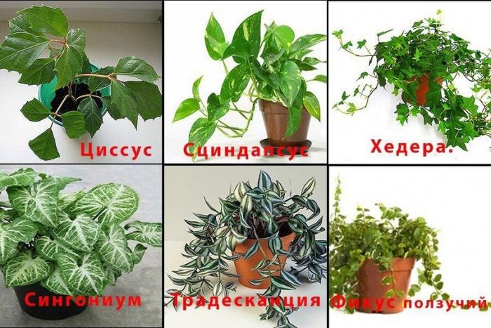 растения которым требующие мало света