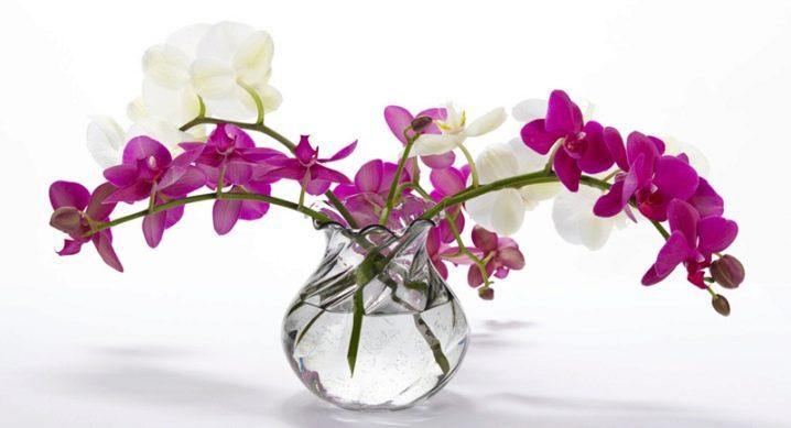 как сохранить живые цветы