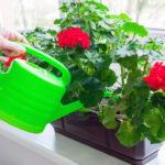 Полив комнатных цветов: подробное руководство