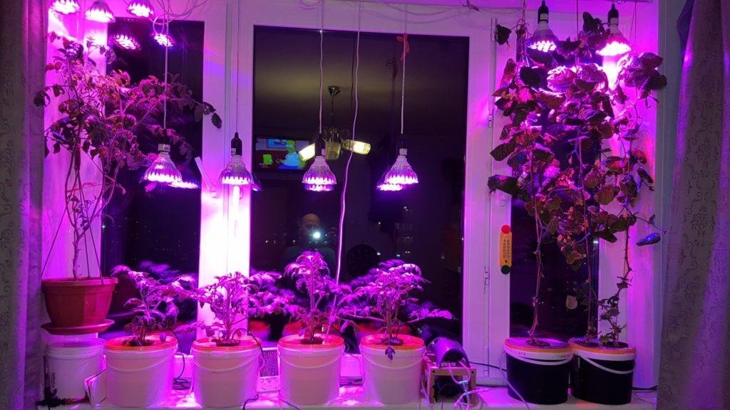лучшее освещение для растений