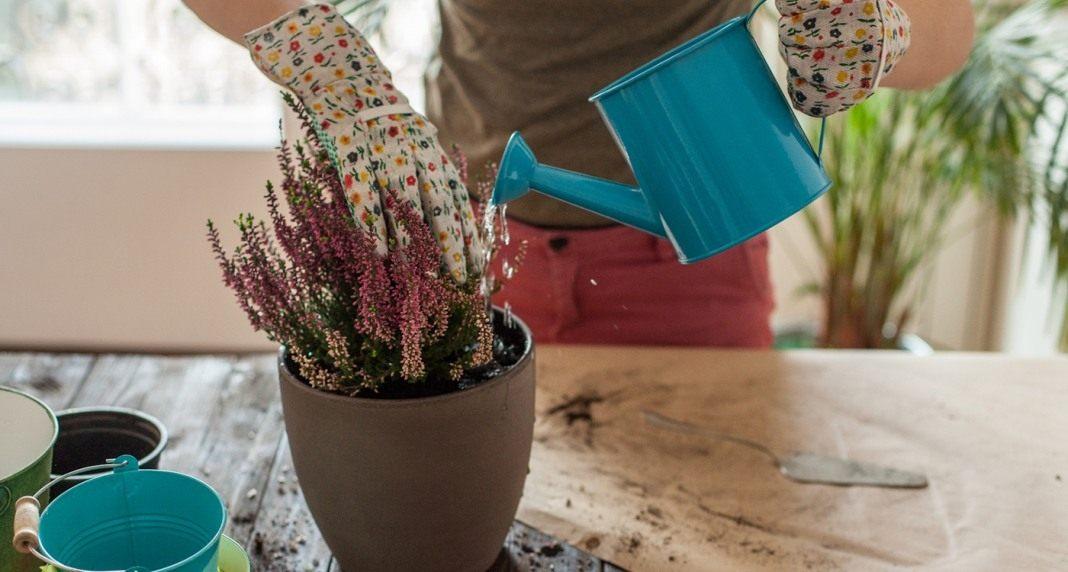как сделать удобрение для цветов