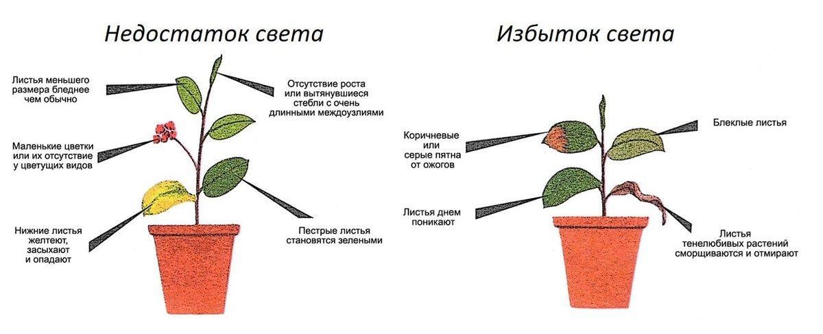 как влияет освещение на растения