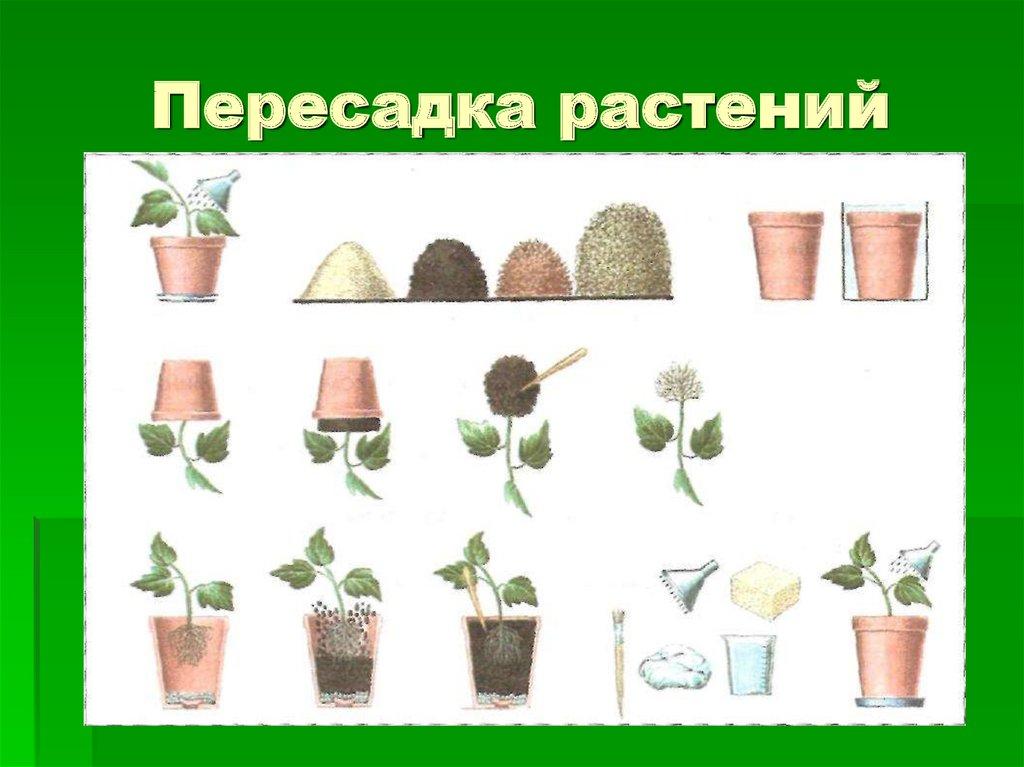 пересаживать цветы зимой
