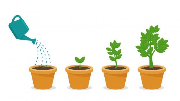 чем поливать цветы чтобы росли