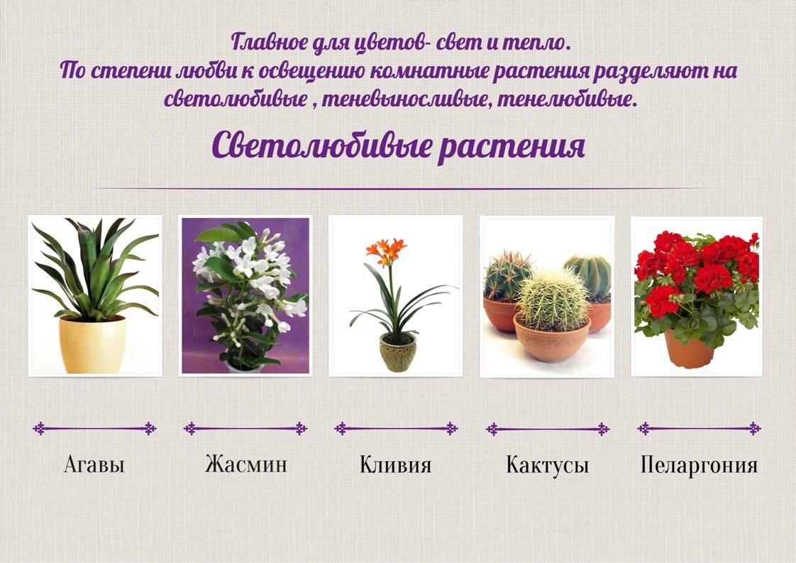 растения которым требующие много света