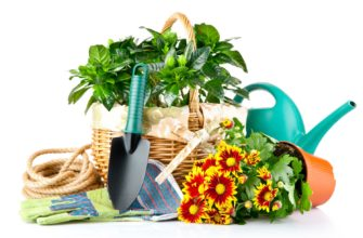 Как правильно пересаживать комнатные цветы в горшках