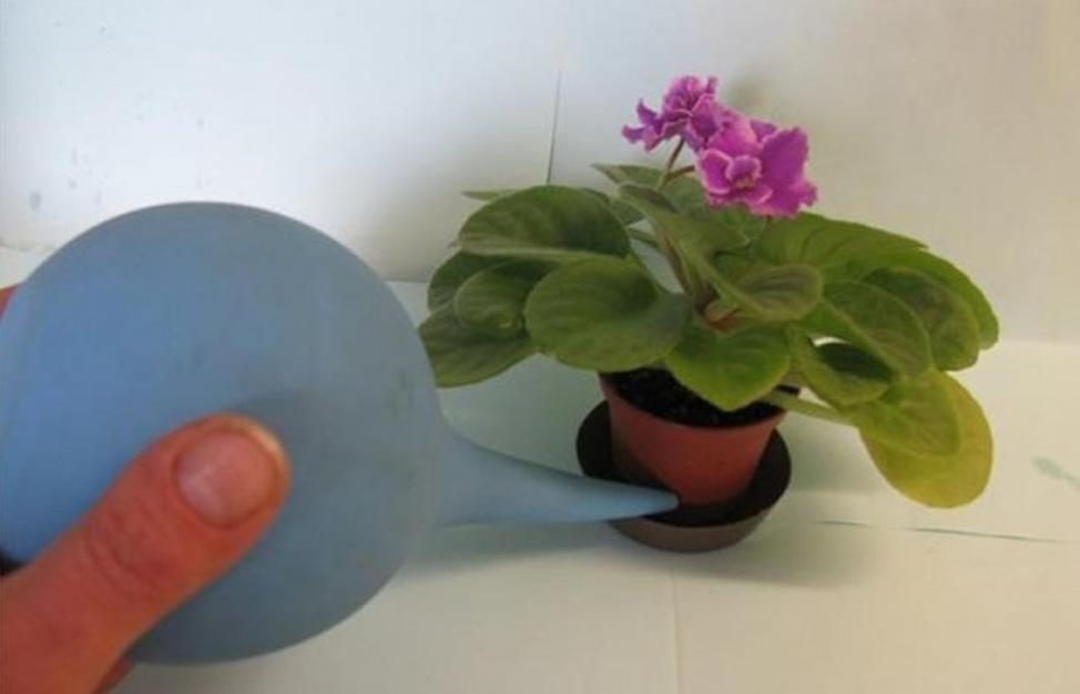 чем полить цветы для цветения