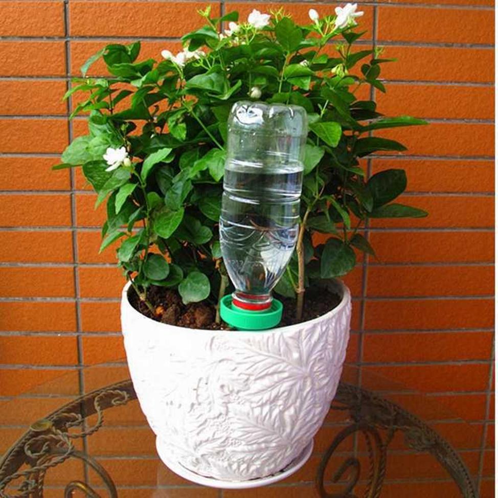 как часто поливать цветы