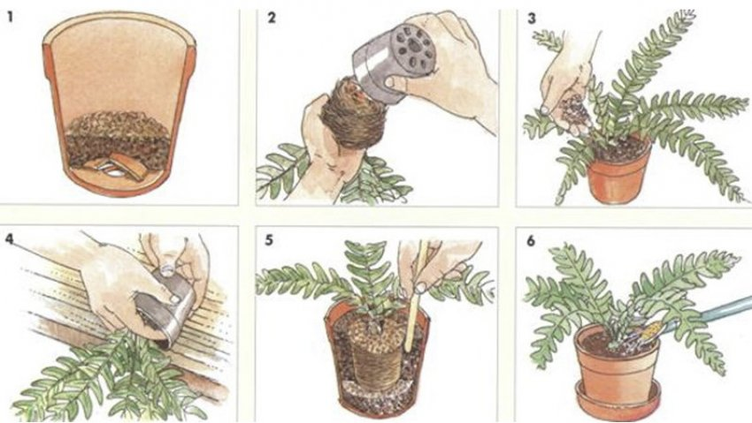 как пересадить цветок пошагово
