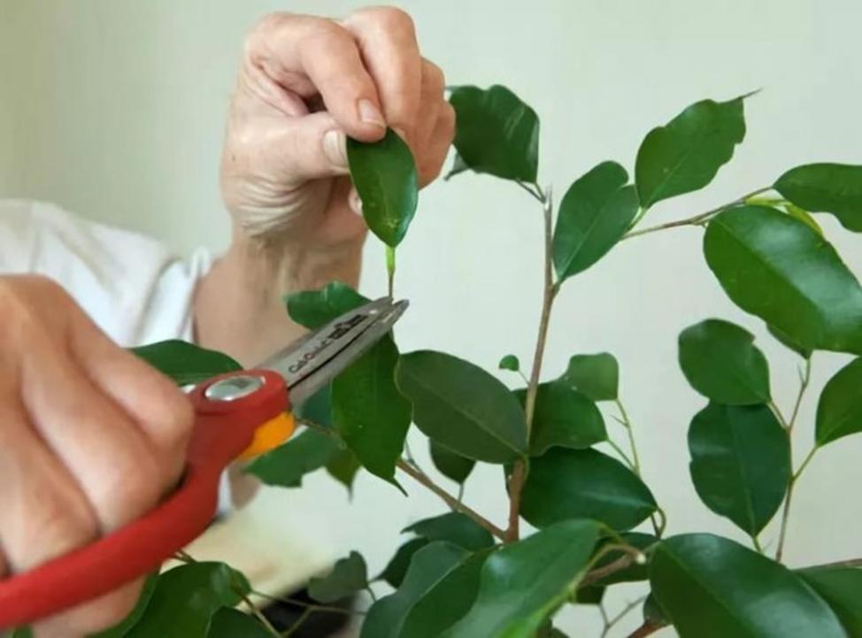 обрезка листьев
