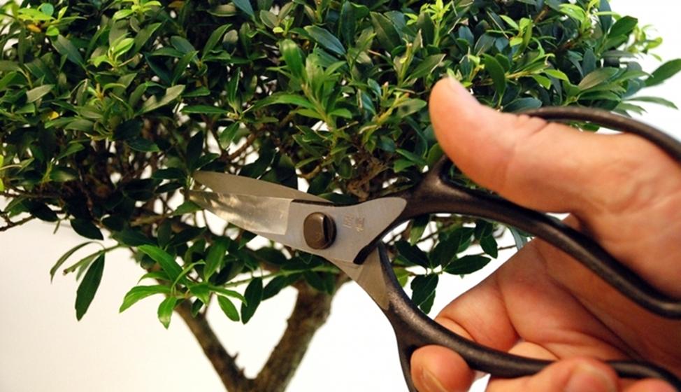 ножницы для обрезки цветов
