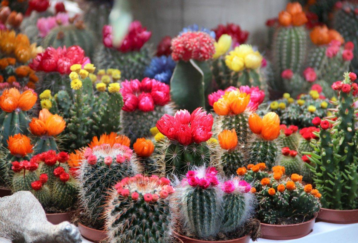 название неприхотливых комнатных растений