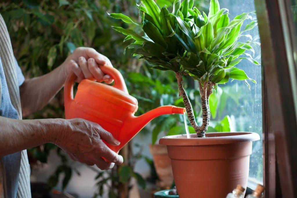 Уход за тенелюбивыми растениями