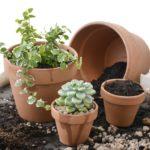 Грунт для комнатных растений: виды грунтов и субстратов, состав грунта, специализированный грунт