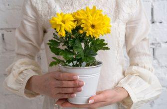Период покоя у комнатных растений: подробное руководство