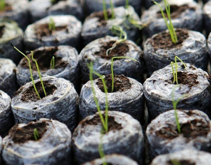 как посадить рассаду в торфяные таблетки