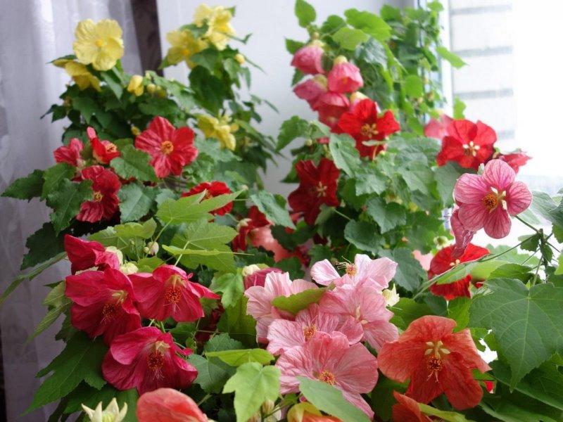 большие неприхотливые комнатные растения
