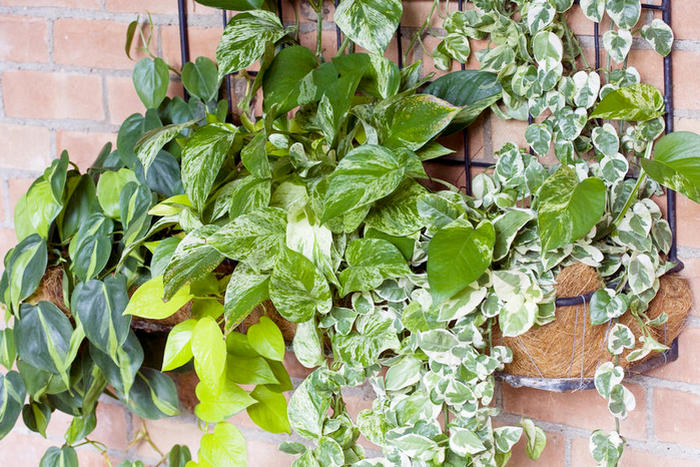 какие комнатные растения неприхотливые