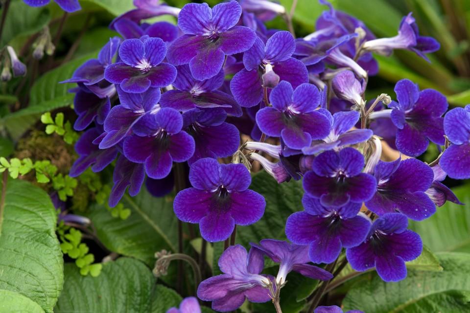 цветущие растения тенелюбивые
