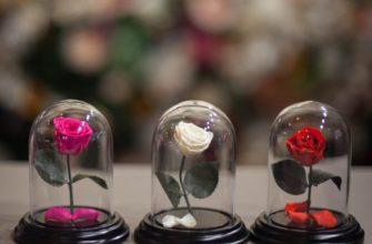Стабилизированные цветы: технологии изготовления, уход, создание композиций своими руками