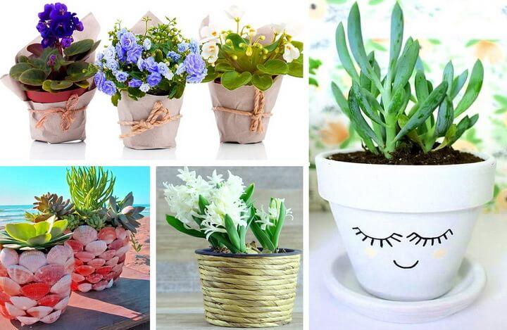 цветочные растения в горшках
