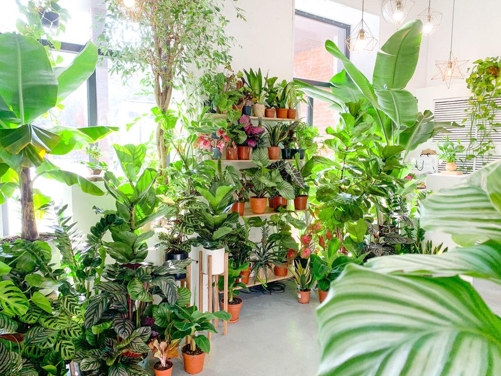 зависимость растений от температуры
