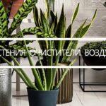 23 Комнатных растений, которые очищают воздух в помещении