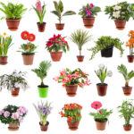 ТОП-25 Самых неприхотливых комнатных растений