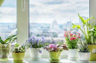 Как выбрать цветочные горшки: виды, материалы, подставки, оформление
