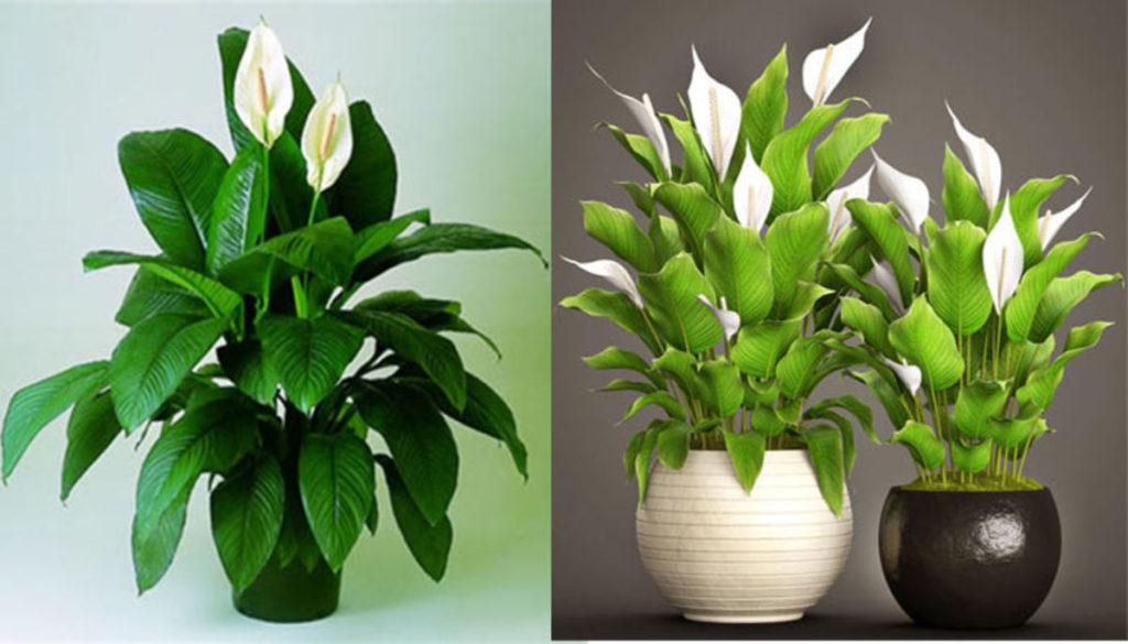 неприхотливые комнатные растения для квартиры