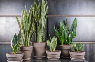 Тенелюбивые и теневыносливые комнатные растения: цветущие, ампельные, крупномеры, размещение и уход
