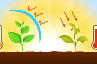 Температура для комнатных растений: оптимальные, максимальные и минимальные значения, хранение цветов