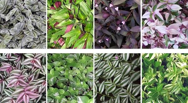 красивые неприхотливые комнатные растения