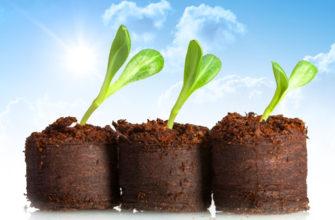 Торфяные таблетки для рассады: использование, выращивание, посадка, уход