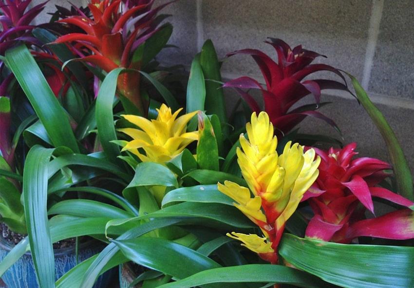 тенелюбивые растения примеры